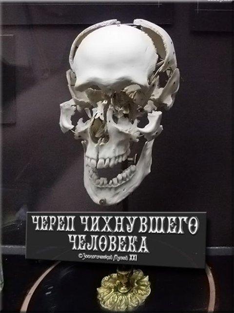 череп чихнувшего человека