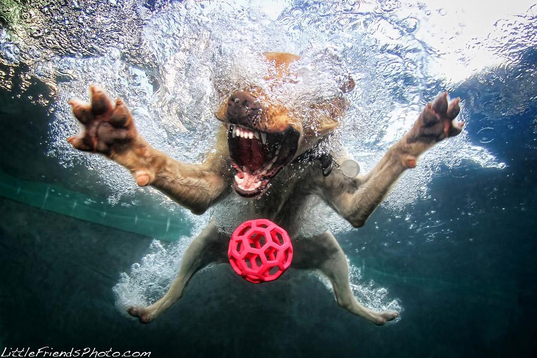 фото ныряющих собак