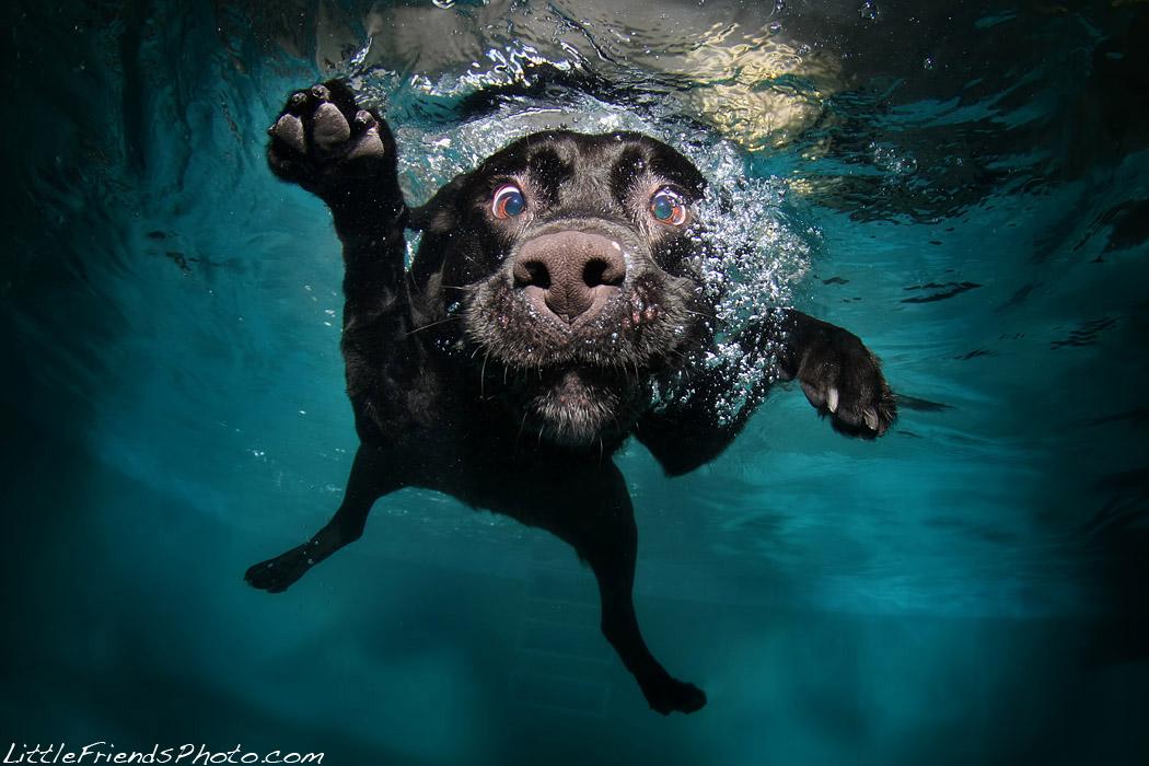 фото плавающих собак