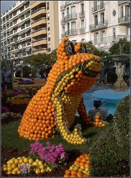 фестиваль цитрусовых в Амстердаме