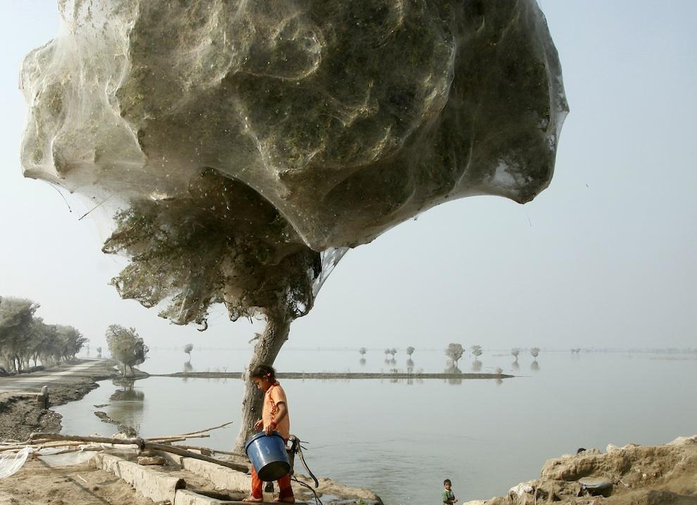 нашествие пауков на Пакистан