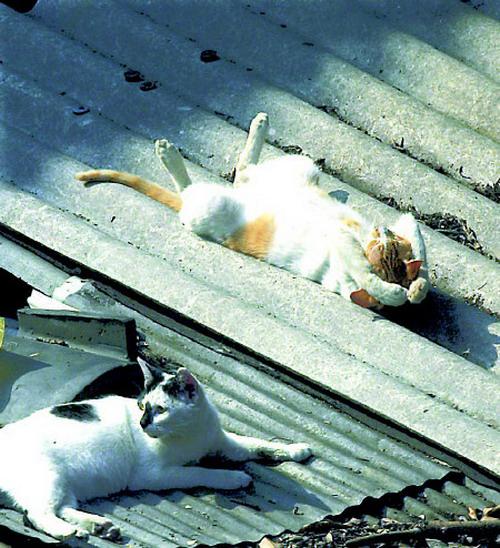 разные позы спящих кошек