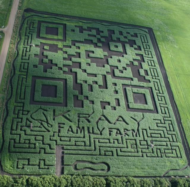 загадочные знаки на кукурузном поле