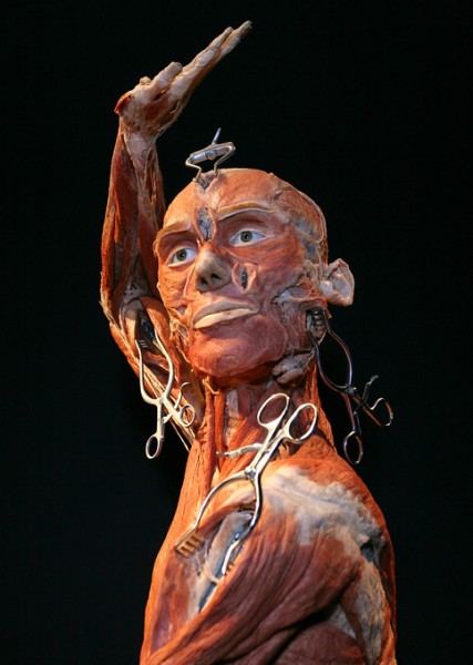 мир тела от Гюнтера фон Хаггенса