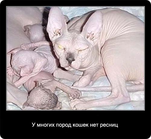 10-интересные факты о кошках в картинках