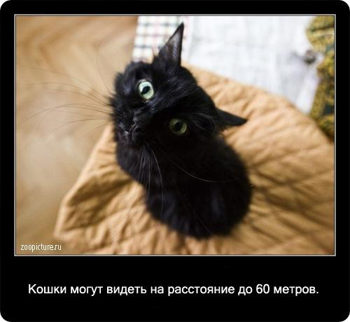 11-интересные факты о кошках в картинках
