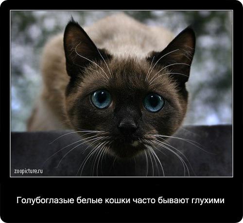 12-интересные факты о кошках в картинках