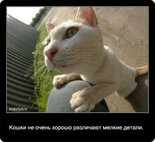 13-интересные факты о кошках в картинках