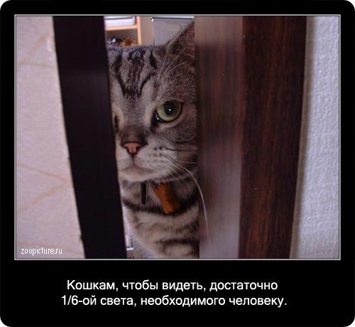 14-интересные факты о кошках в картинках