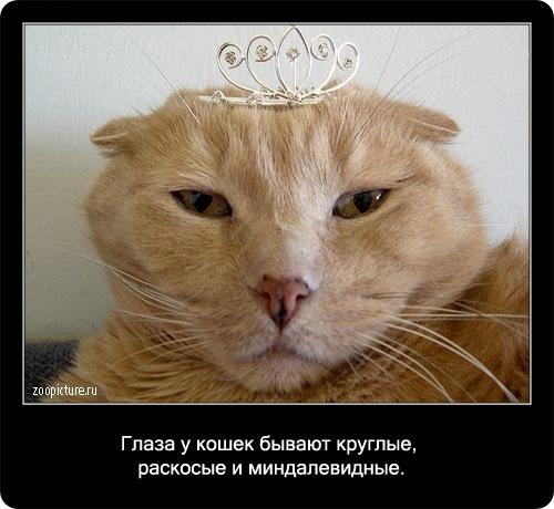 15-интересные факты о кошках в картинках