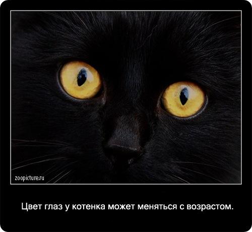 16-интересные факты о кошках в картинках