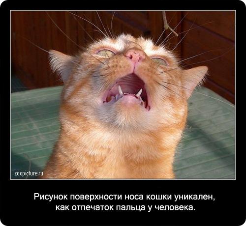 17-интересные факты о кошках в картинках