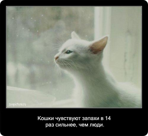 18-интересные факты о кошках в картинках