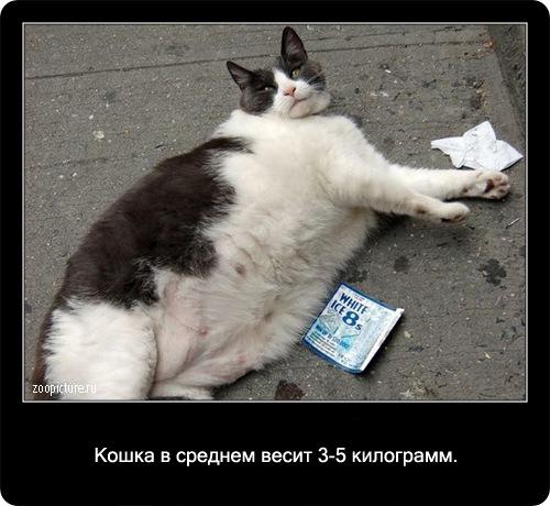 20-интересные факты о кошках в картинках