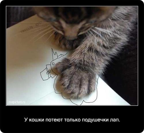 21-интересные факты о кошках в картинках
