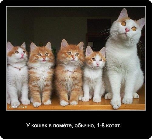 22-интересные факты о кошках в картинках