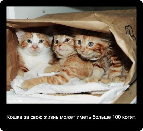 23-интересные факты о кошках в картинках