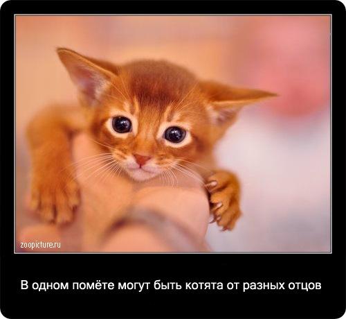 24-интересные факты о кошках в картинках