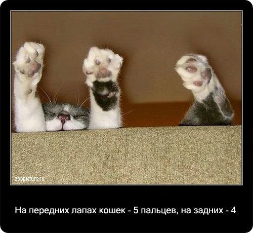 27-интересные факты о кошках в картинках