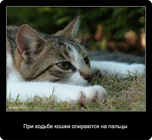 28-интересные факты о кошках в картинках