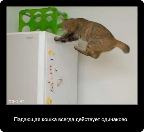 40-интересные факты о кошках в картинках