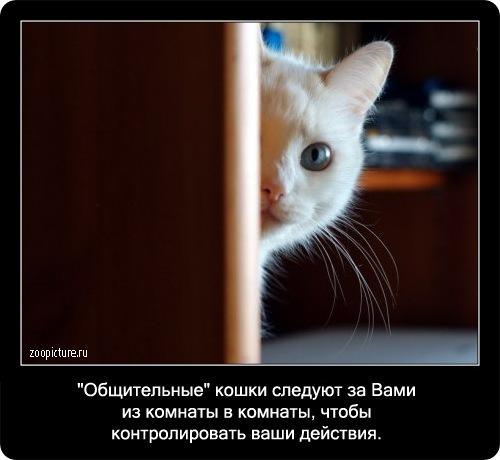 41-интересные факты о кошках в картинках
