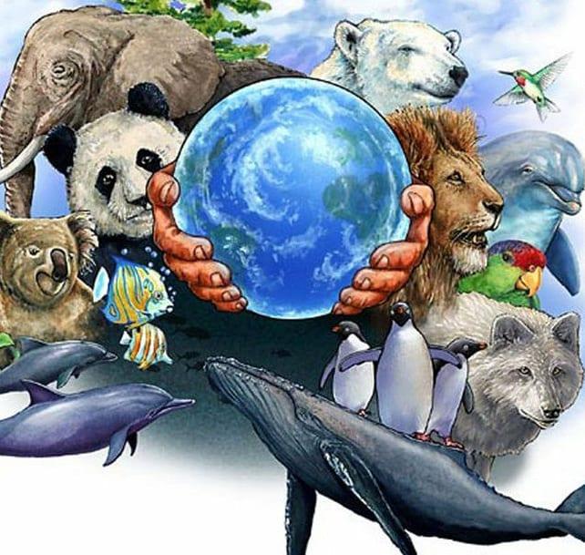 что картинки как защитить животных уродливые