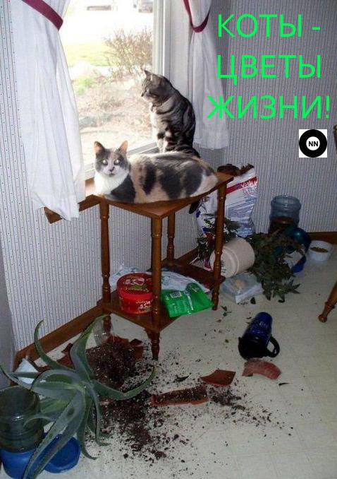 коты цветы