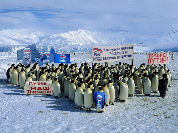 пингвины ЕР