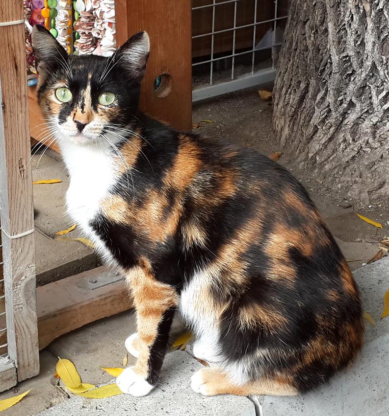кошка-болгарка