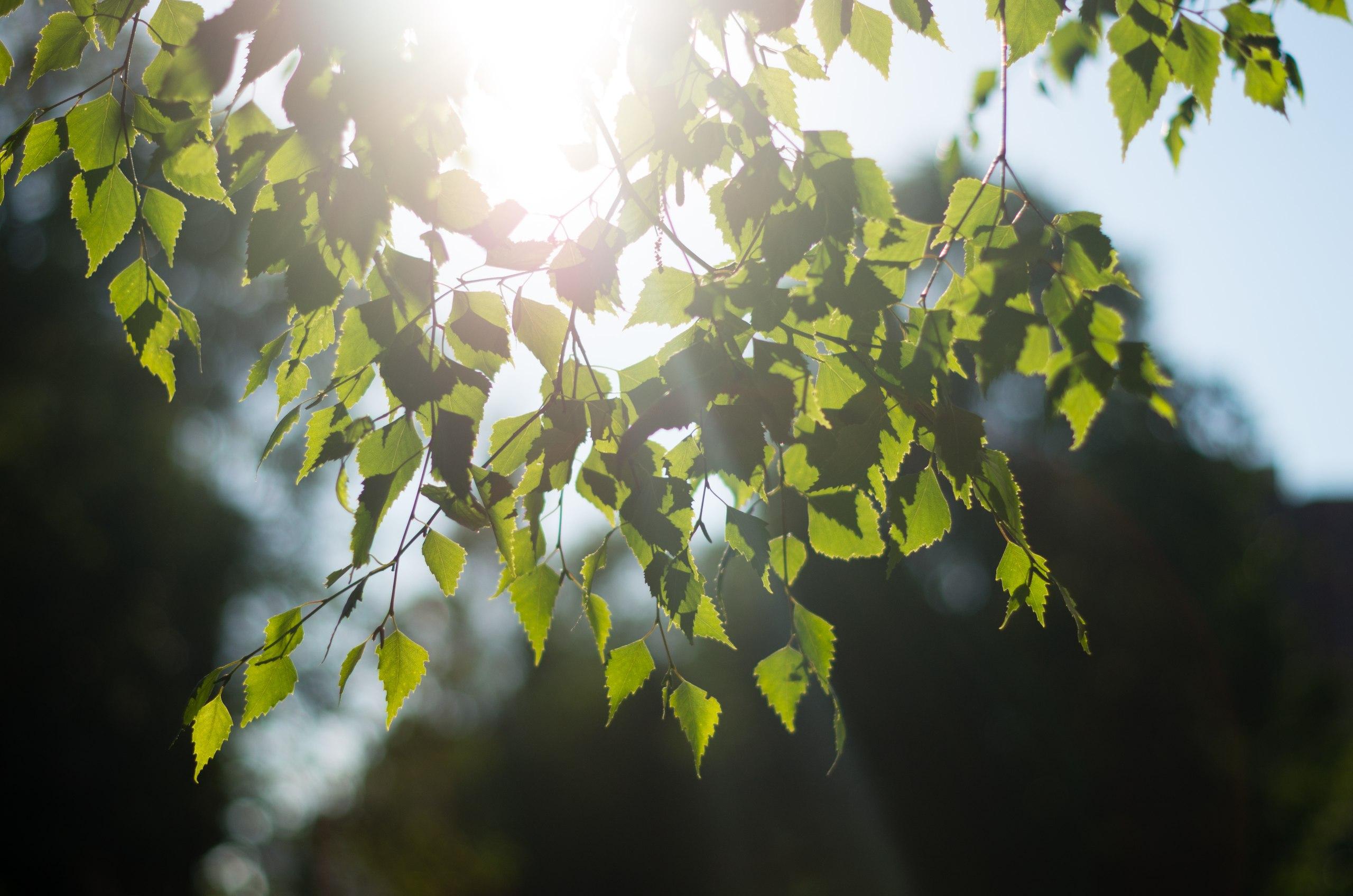 Фото луч солнца сквозь листву