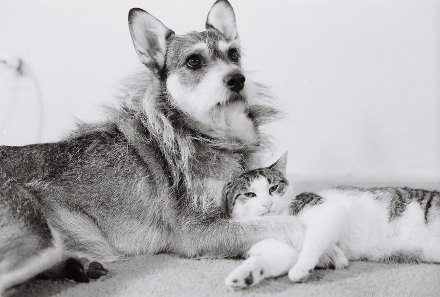 Картинки по запросу Джинни — собака, спасшая более 300 кошек (Ginny)
