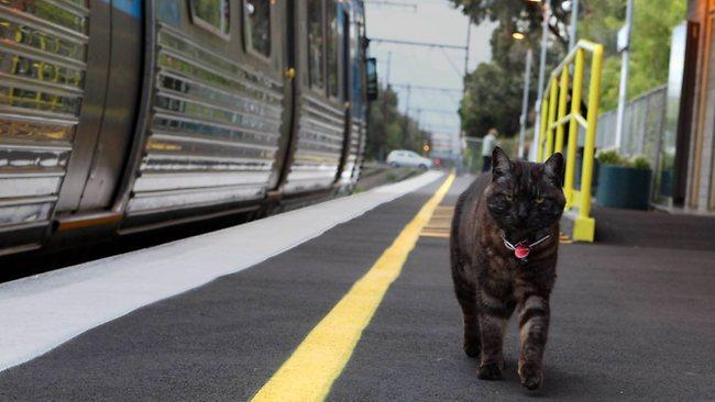 288795-graeme-the-cat