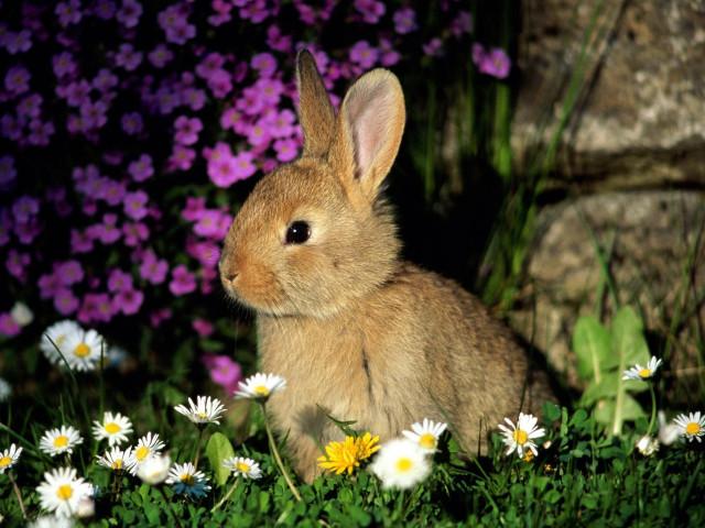 Милый кролик на зеленом фоне