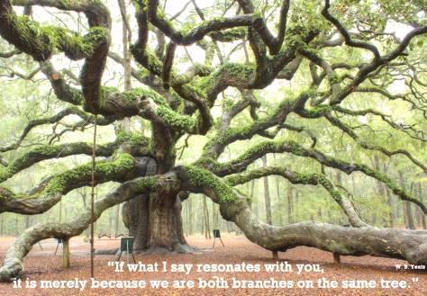 ____резонируют ветви дерева