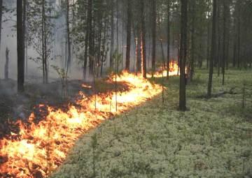 Как спасаться от лесного пожара