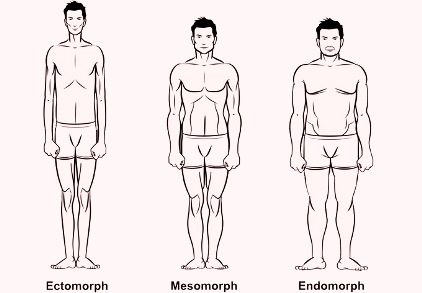 три типа фигуры определяют вид питания