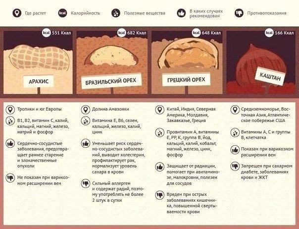 12 видов орехов