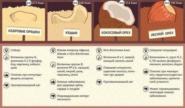 12 видов орехов -