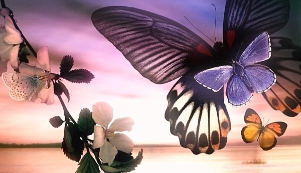 __бабочки