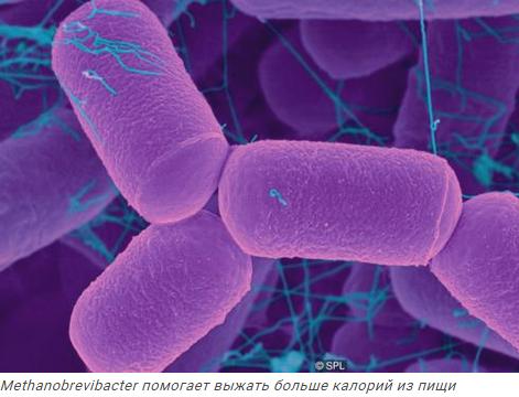 Что полезнее йогуртов для микрофлоры кишечника