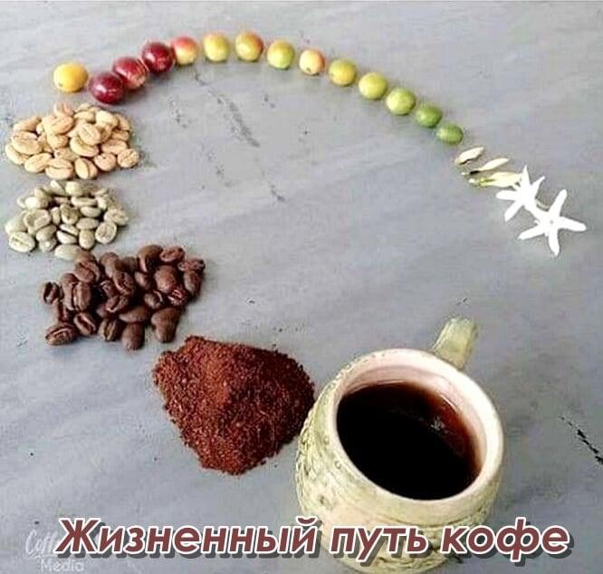 кофе на пустой желудок - вредно или полезно