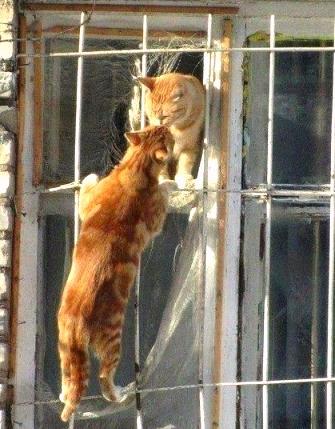 ___любовь котов