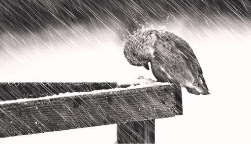 _непогода