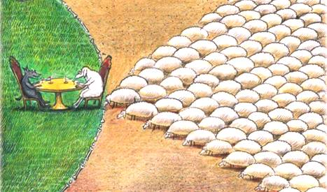 ______sheep