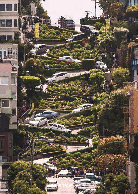 ____Lombard Street, San Francisco