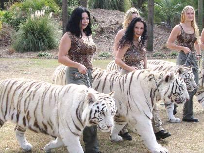 ______жен и тигры