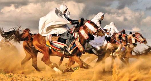 HORSES Libyan Arab Jamahiriya