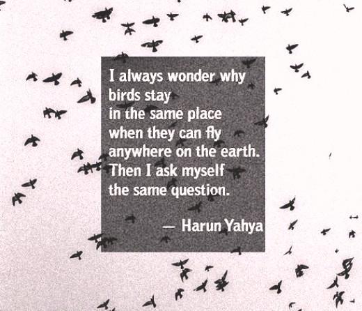 _а люди, как птицы