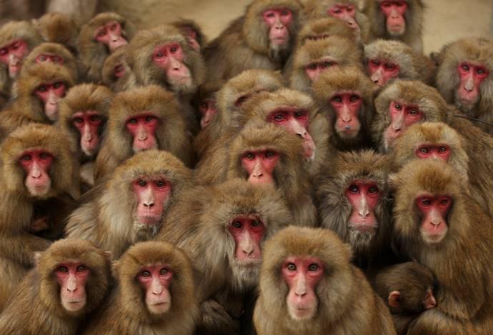 _обезьяны и банан.